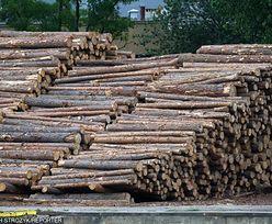 Do Europy trafia nielegalne drewno z Ukrainy. Transport zatrzymuje się w Polsce