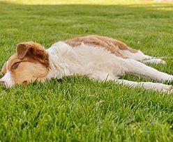 Jakie niebezpieczeństwa czyhają na Twojego psa wiosną?