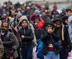Raport CEED Institute. Czego nie wiedzieliśmy o imigrantach w Europie i w Polsce