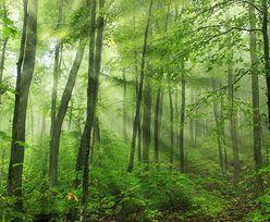 Nieruchomości w Polsce. Bez poprawek Senatu do noweli pozwalającej na pierwokup prywatnych lasów przez państwo