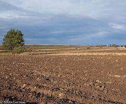 Ustawa o obrocie ziemią do zmiany. Każdy będzie mógł kupić hektar