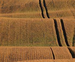 Uprawy GMO. Polska wśród krajów, które nie chcą upraw genetycznie modyfikowanych