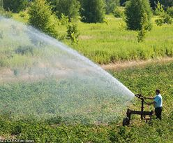 Rolnicy stracili na upałach ponad 500 mln zł. I to jeszcze nie koniec