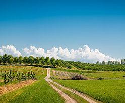 Nawozy w sadownictwie - 5 najczęściej powtarzanych mitów