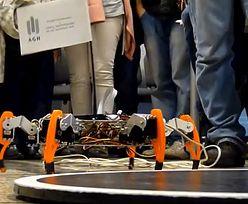 Festiwal Robotyki Robocomp. Główna atrakcja - zawody robotów