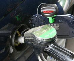 """Polska chce produkować biopaliwa z """"zielonego złota"""""""