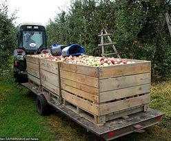 Straty w rolnictwie oszacowano na ponad 393 mln zł