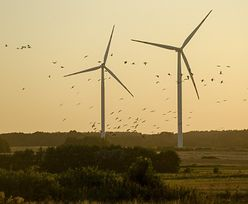 Elektrownie wiatrowe opłacalne dzięki ustawie. Energa liczy zyski