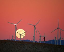 Państwowa spółka chce płacić właścicielom wiatraków, żeby nie produkowali prądu