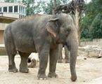 Słonie pod ochroną na eBayu