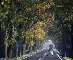 PiS bierze się za drzewa przy drogach. Pójdą pod topór