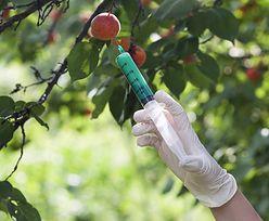 """Unijne kraje mówią """"stop GMO"""", ale tylko na niby"""