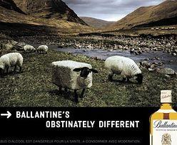 Reklama alkoholu. Jak i po co promować napoje wyskokowe?