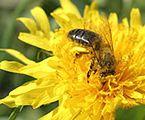 Kampania informacyjna na rzecz ochrony pszczół