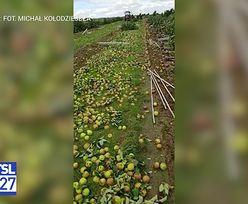 Burze zniszczyły uprawy. Rolnicy bez ubezpieczenia
