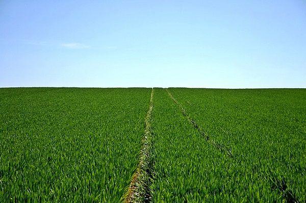 Oszczędna gospodarka fosforem
