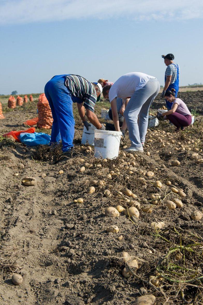 Dopłaty dla rolników. Wypłacono ponad 13,5 miliarda złotych