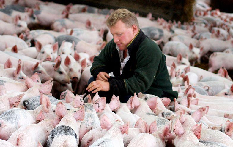 Afrykański pomór świń, susza i zakończenie embarga na brazylijskie mięso, pogłębiło spadki.