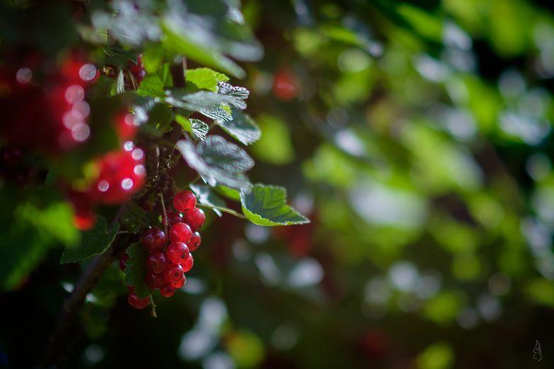 Niskie ceny owoców. Przetwórcy winią rolników
