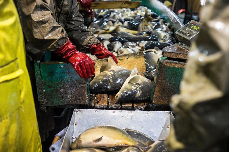 329 kilogramów żywej ryby - na takie zakupy pozwala średnia pensja w Polsce. Oczywiście mowa o kwotach brutto