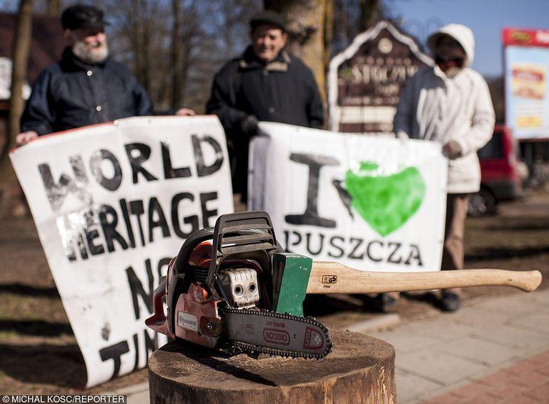 Ekolodzy chcą natychmiastowego wstrzymania wycinki w Puszczy Białowieskiej. Dyplomata: Polsce grożą kary