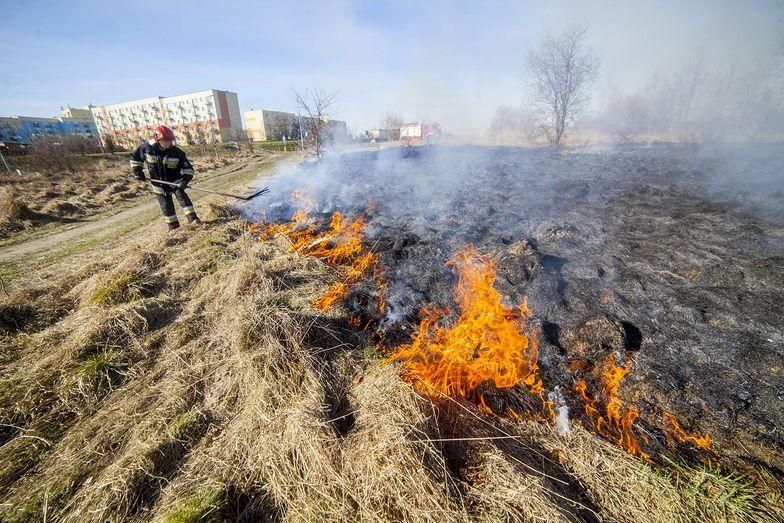 Za wypalanie traw rolnicy mogą stracić dopłaty