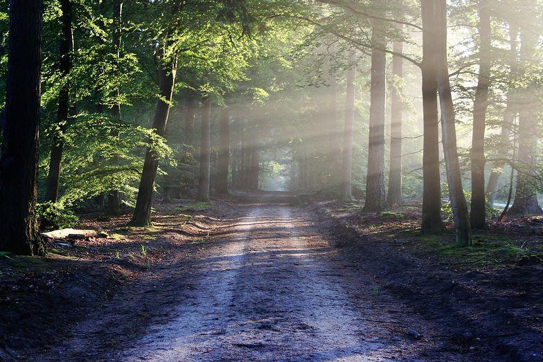 Lasy Państwowe pod lupą NIK. Przychody spadają, a pensję rosną