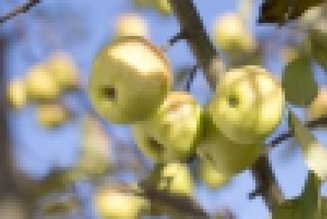 Singapur oczekuje Polskich jabłek