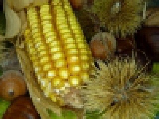 Mikotoksyny wywołać mogą problemem w ziarnie kukurydzy