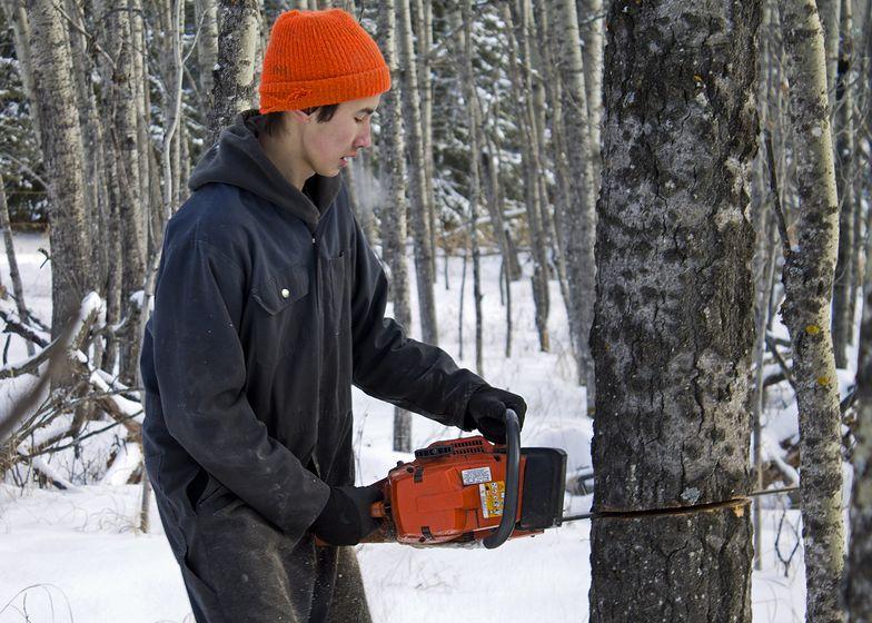 Wycinka drzew na własnej działce już bez zezwolenia. Jan Szyszko zliberalizował ustawę o ochronie przyrody