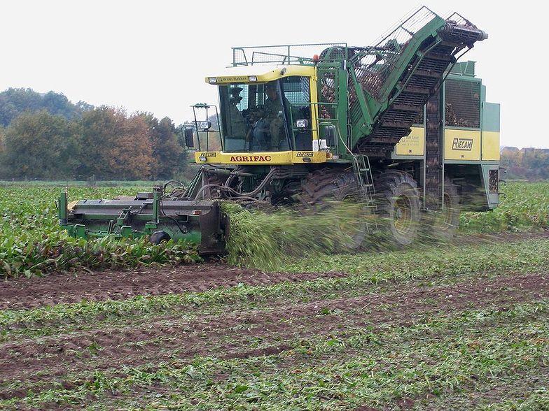 Jurgiel zachęca rolników i cukrowników do zawarcia porozumienia branżowego