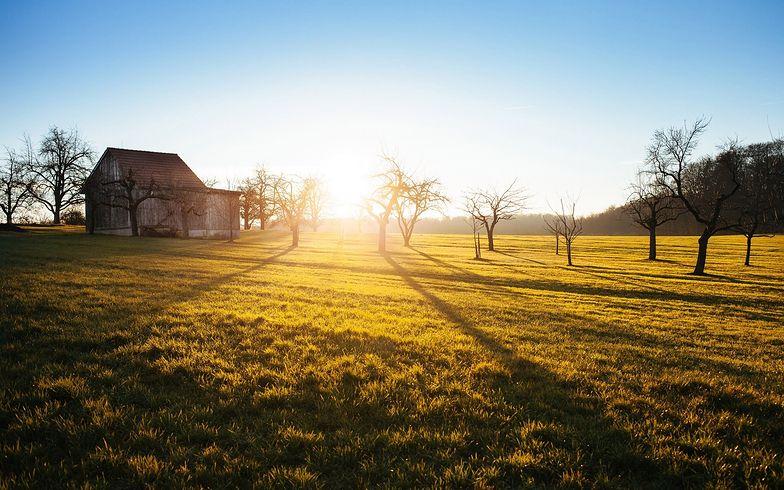 Posłowie chcą, by rolnicy mogli sprzedać więcej ziemi