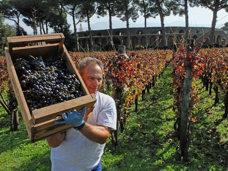 Gospodarka Włoch. Wyprodukują więcej wina, niż Francja