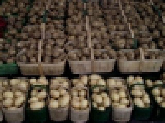 Uprawiamy coraz mniej ziemniaków