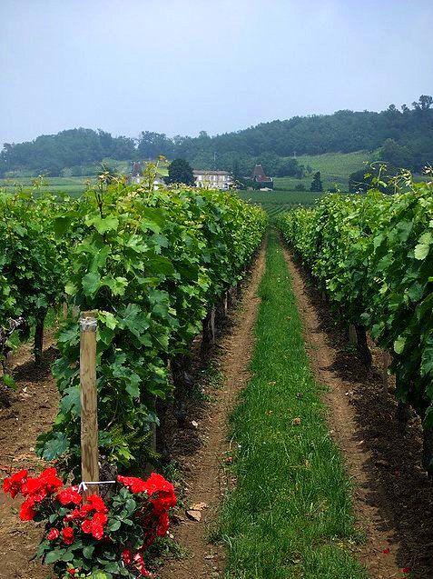Przedmieścia we Francji bogatsze od wielu wsi