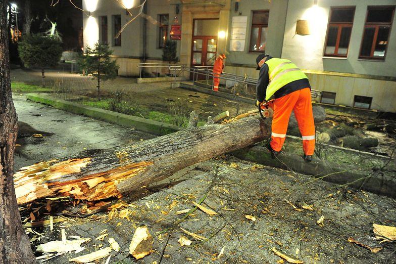 Usuwanie skutków wichury, jaka panuje w Szczecinie.