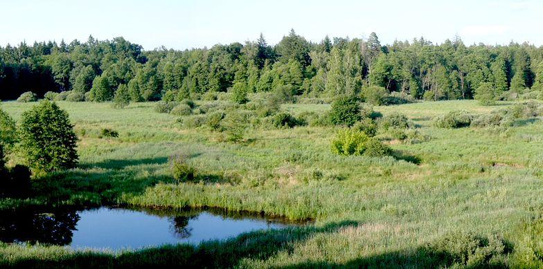 W Puszczy Białowieskiej wycięto 7 tys. drzew. LP: dla bezpieczeństwa