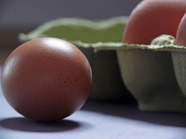 Czesi idą na wojnę z naszą żywnością? Właśnie zniszczyli 5 milionów jaj z Polski