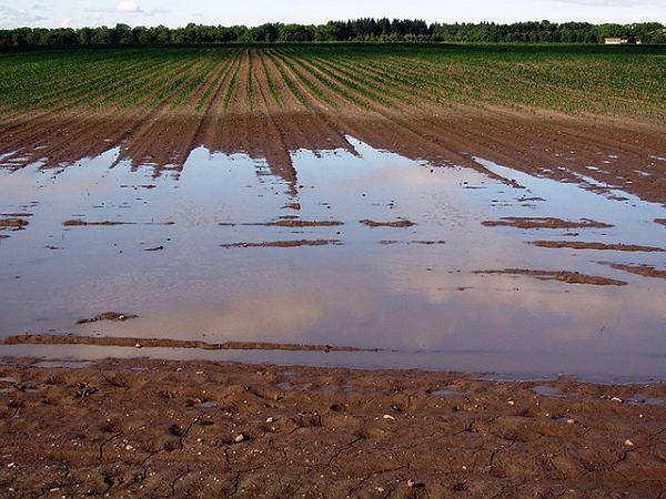 Jak zapobiegać erozji gleby?