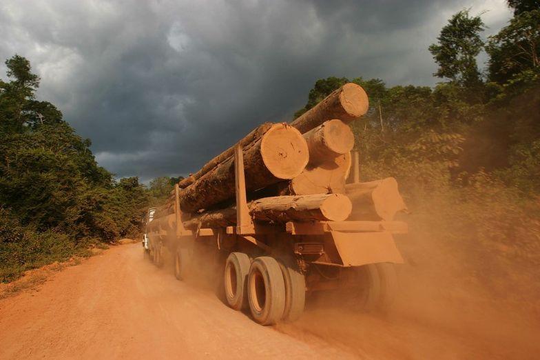 Gorączka złota niszczy lasy nad Amazonką