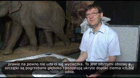 Na wystawie w Londynie zostanie pokazany mamut
