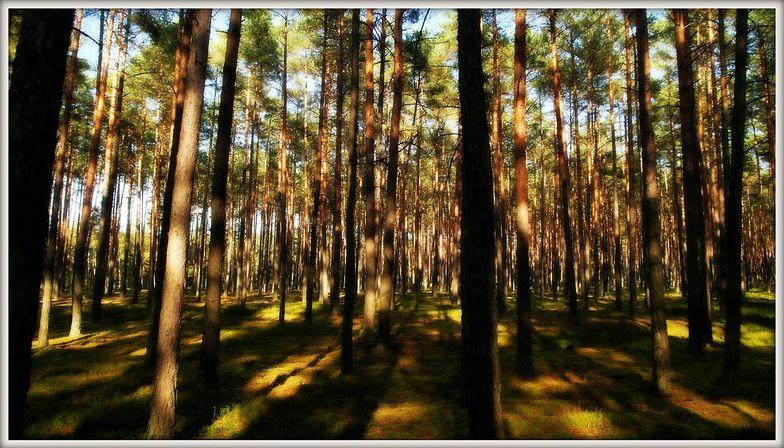 Ustawa o lasach weszła w życie. Zobacz, co się zmieniło