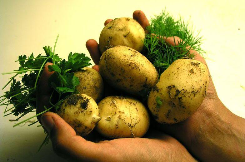 Firma dąży do tego, aby zwiększyć udział posiadanych na wyłączność odmian ziemniaka z 40 do 85 proc.
