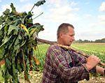 Szwecja: Zlikwidować dopłaty dla rolników