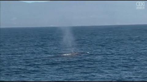 Pilotażowy program ochrony wielorybów