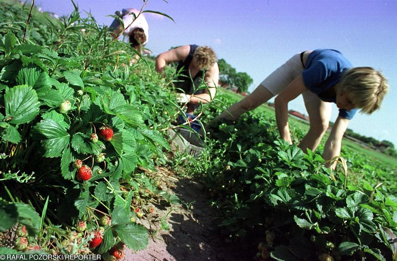 Rolnicy otrzymają około 11 mld zł zaliczek na poczet dopłat