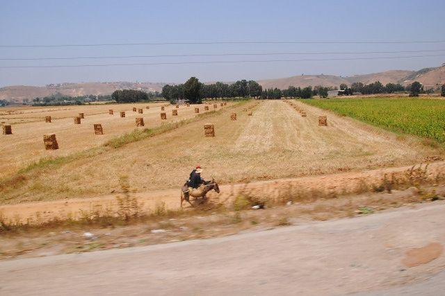 Rolnictwo Afryki Zachodniej - niewykorzystany potencjał?