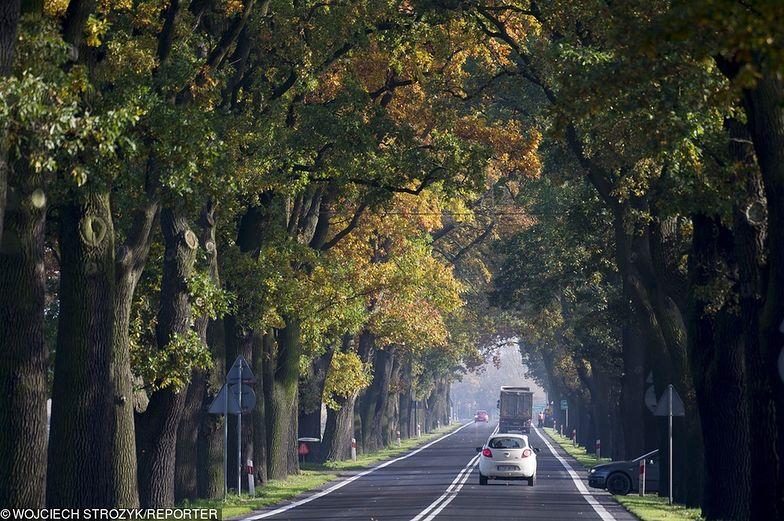 Każdego roku w wyniku zderzeń z przydrożnymi drzewami ginie prawie pół tysiąca osób, a ok. 2,5 tys. zostaje rannych
