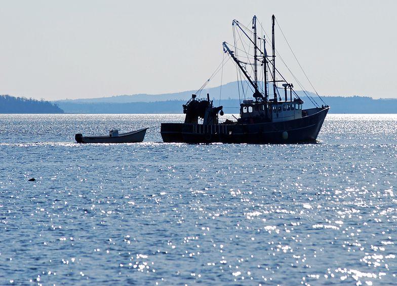 Import z Japonii. Boją się radioaktywnych ryb