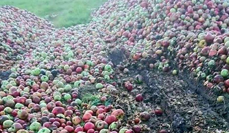 Sadownik musiał być zdesperowany. Wysypał ciężarówkę jabłek po informacji ze skupu